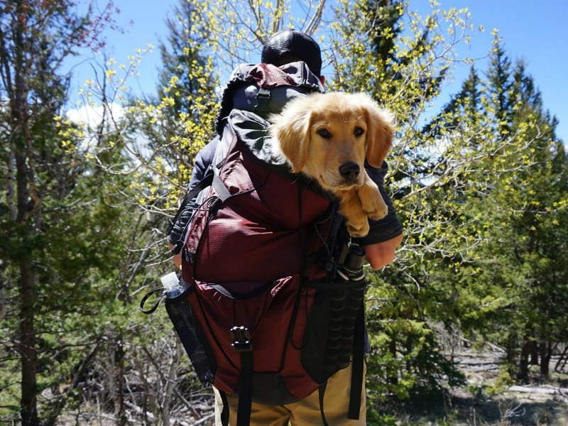 man carrying a backpack with a puppy inside