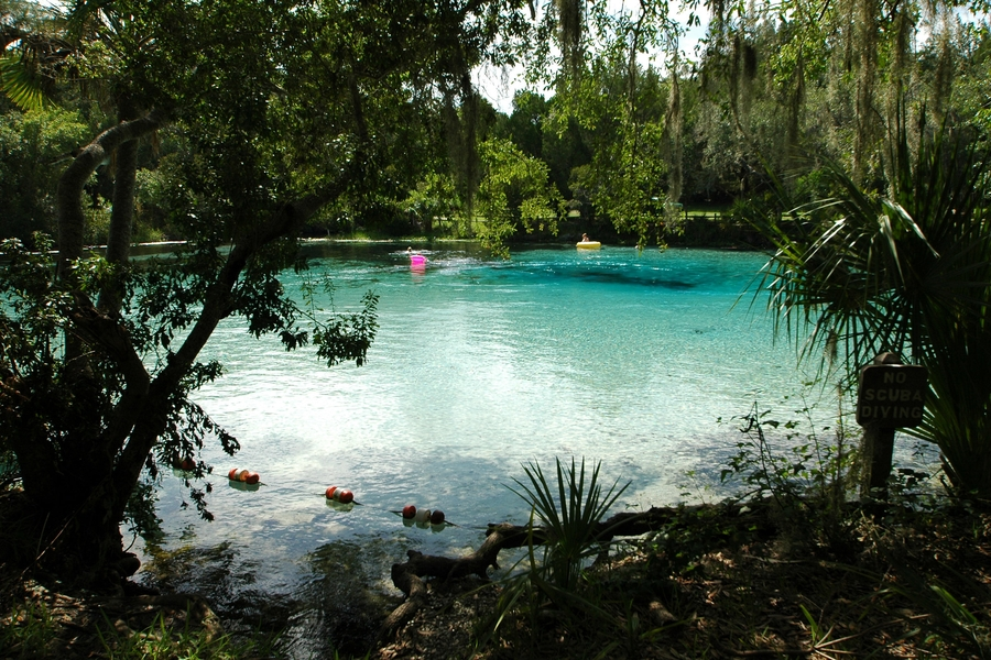 lake at Ocala National Forest