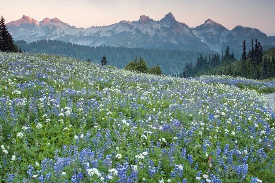 Mount Rainier National Park in the summer