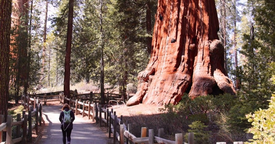 Sequoia & Kings Canyon for a Hiking Trip
