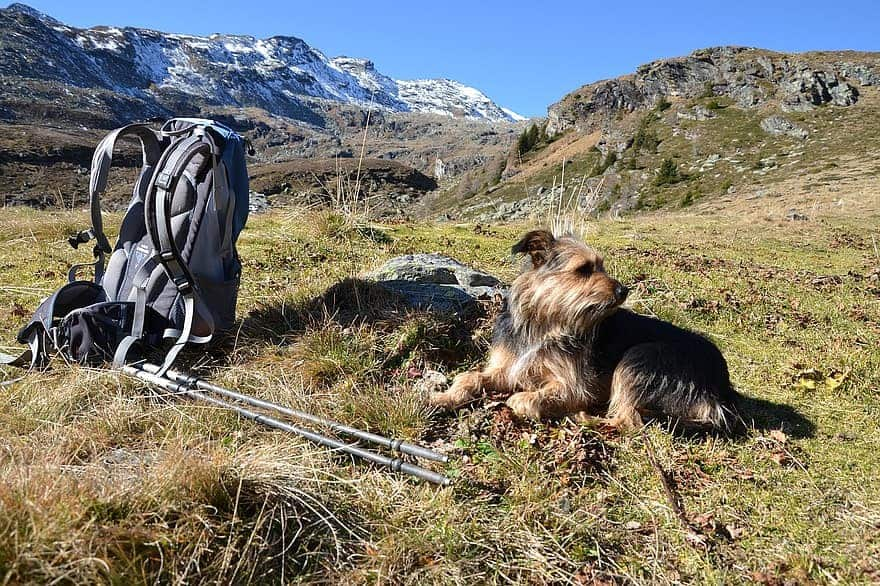 hiking-with-a-dog