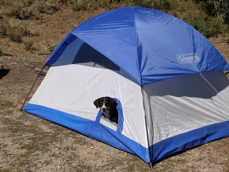 tent-with-a-dog-door