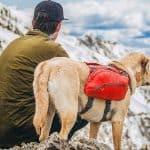 dog at backpackingwith man